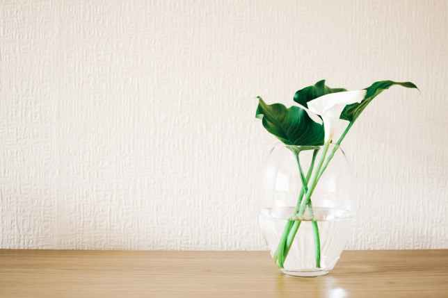 green plant on clear glass vase